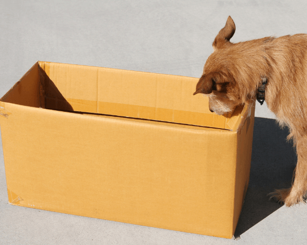 dog looking in a cardboard box
